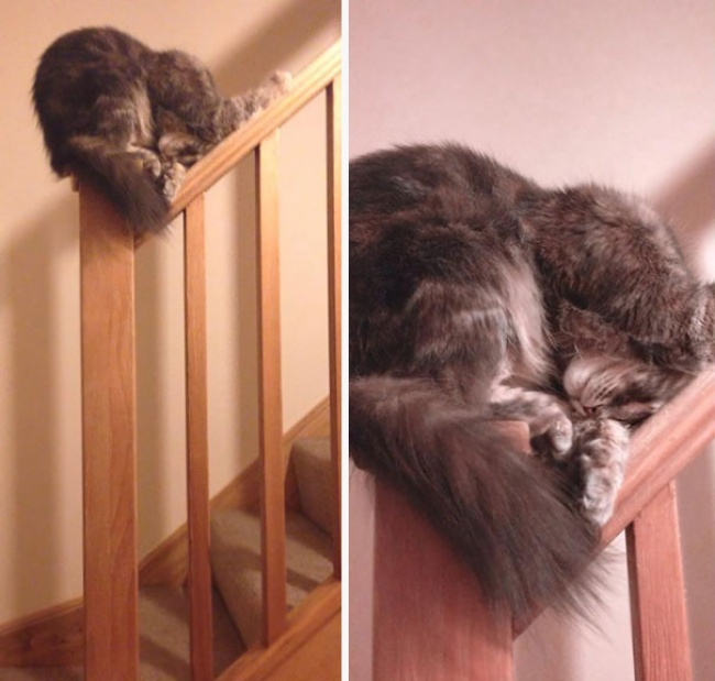 2287710-sleeping-cats-95-57ced8c9aa920__605-1475771731-650-1a2875be8a-1476153870