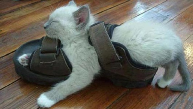 cats-sleeping-funny-positions-17